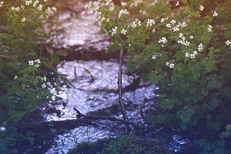 spring effect bachwiesen bild 4.jpg