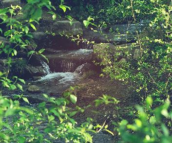 bachwiesen spring effect 2 bild 2.jpg