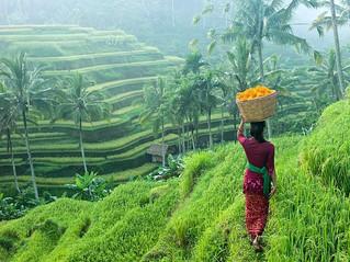 Ubud, linn Bali saarel, kus kõigel on hing sees.