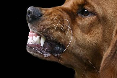 chien menace.jpg