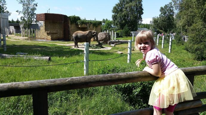 The Zoo of Tallinn
