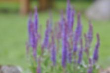 Flowers in garden of Koru Cottage