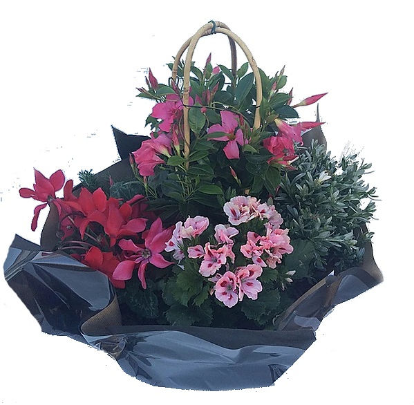 Coupe plante1.jpg
