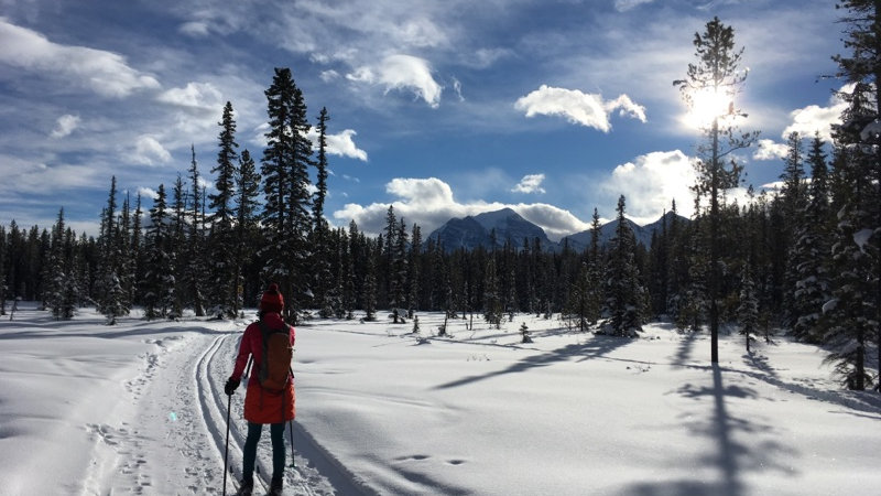 Gift Certificate - XC Ski in Lake Louise Level 1 or 2 + Tour for 2
