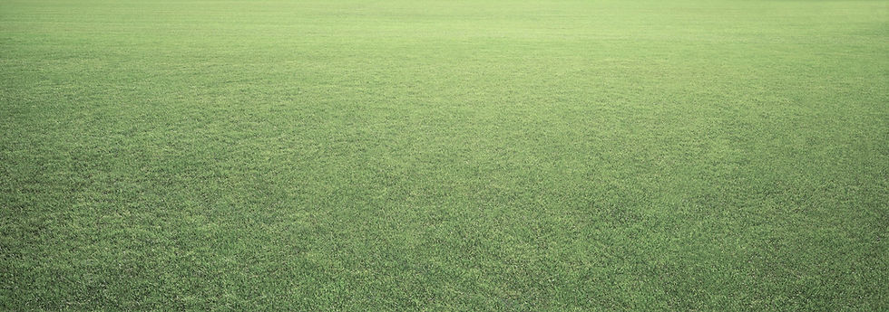 adjusted grass.jpg