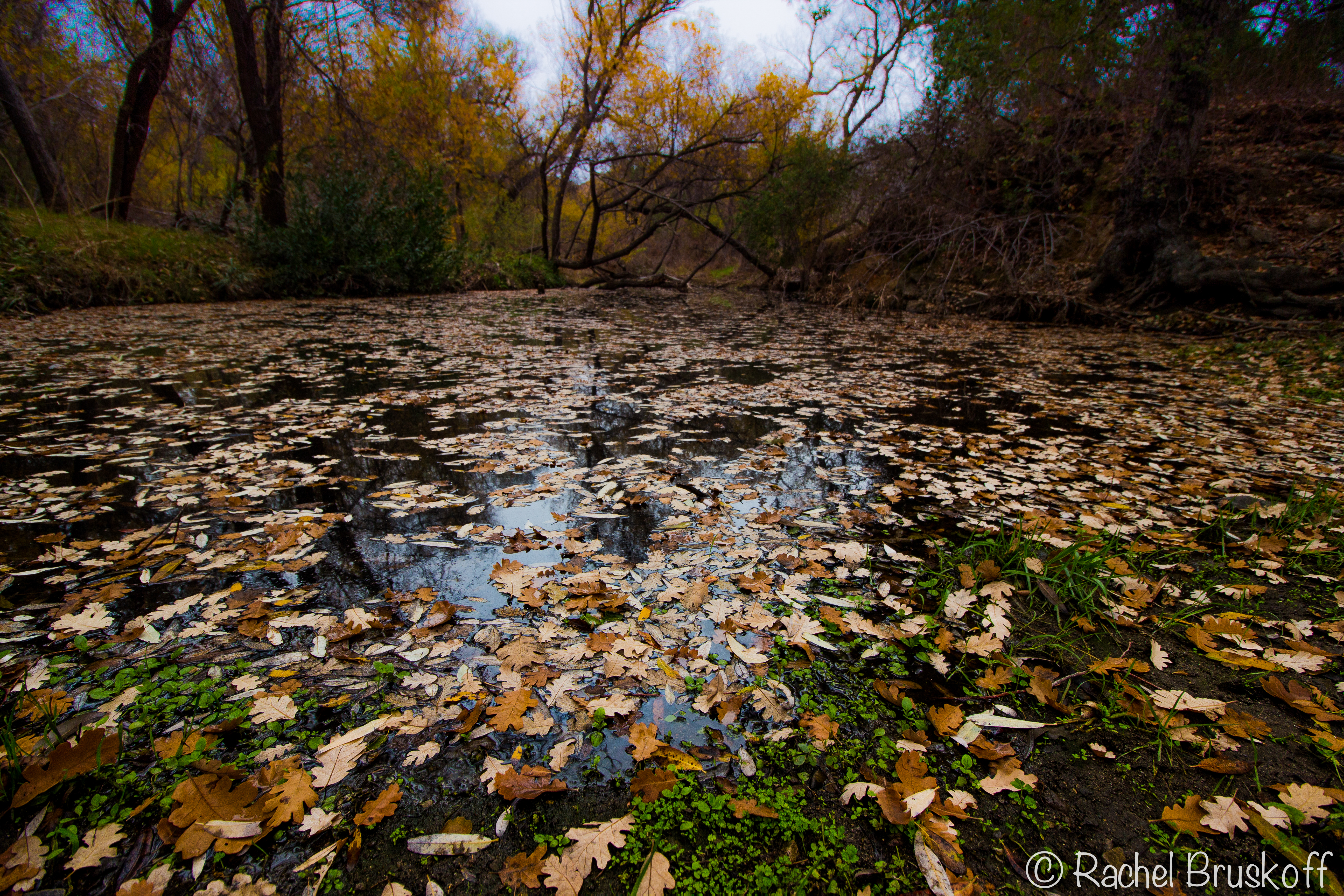 fallen leaves in creek-8466