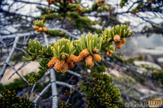 little things in tree-.jpg