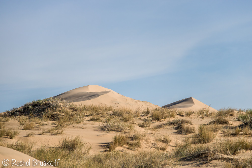 Kelso dunes was overrun with grass and greenery after the various storms from the winter.
