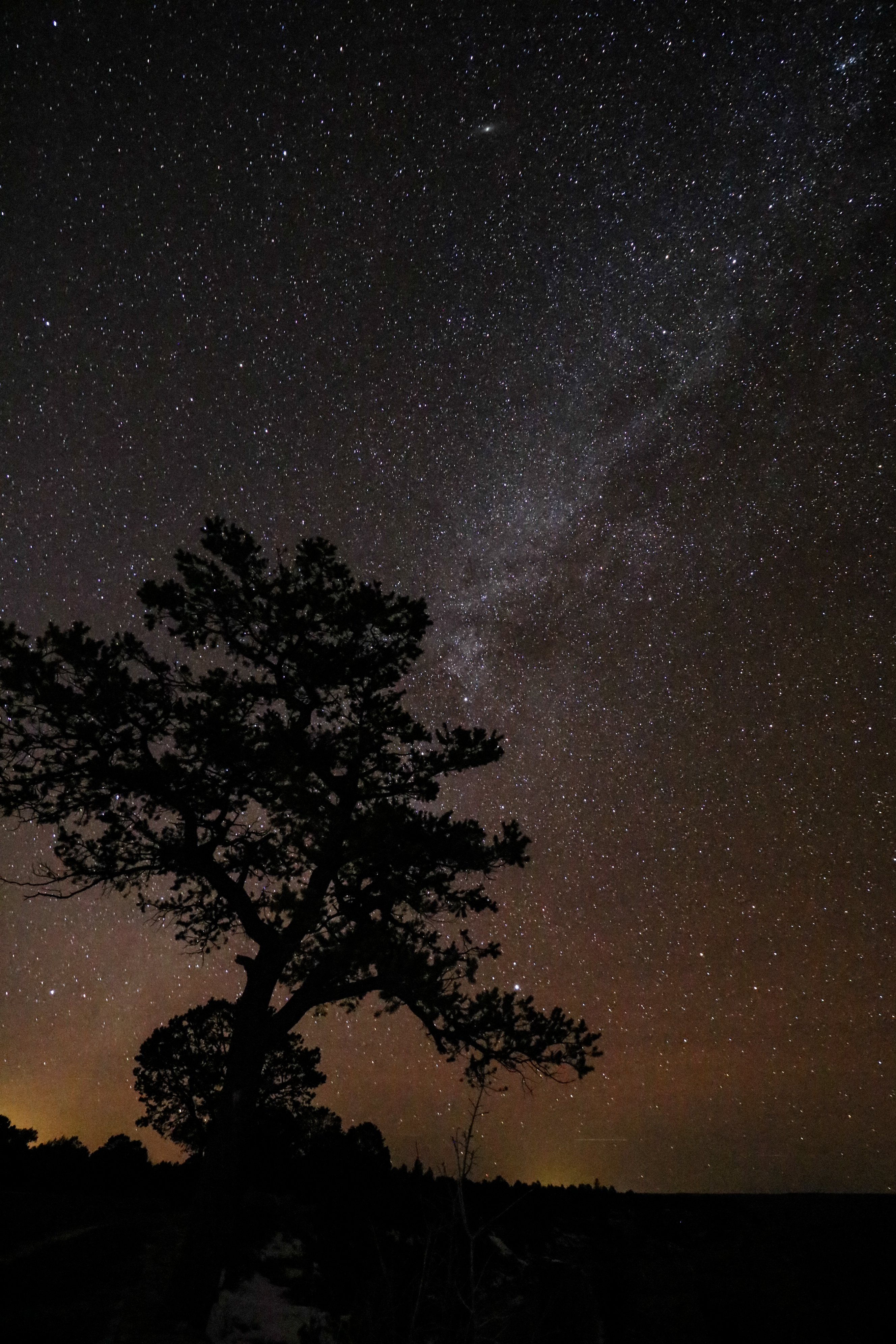 milkyway tree-6241