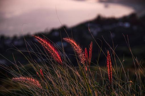 reeds-.jpg