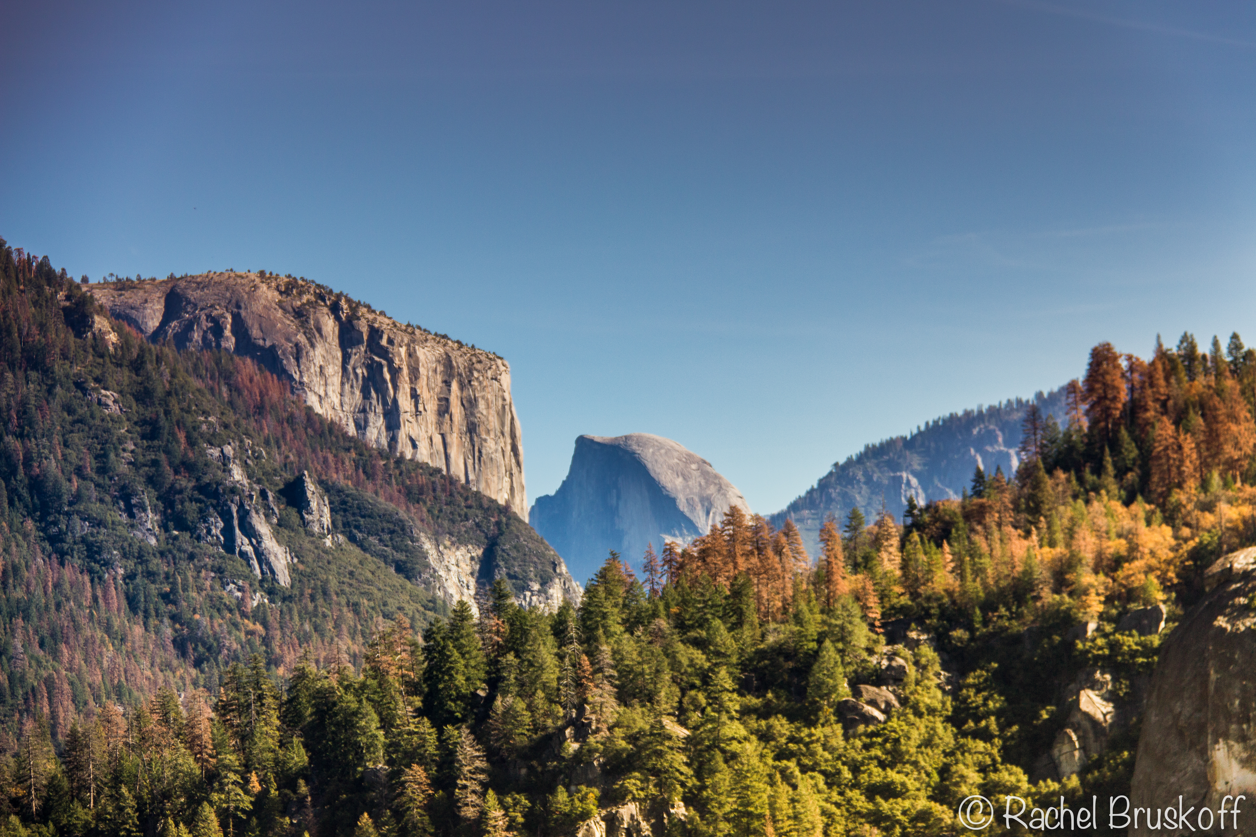 half dome from afar autumn trees-7092