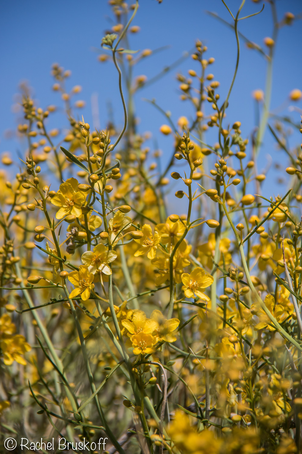 A closeup of some of the yellow wildflowers.