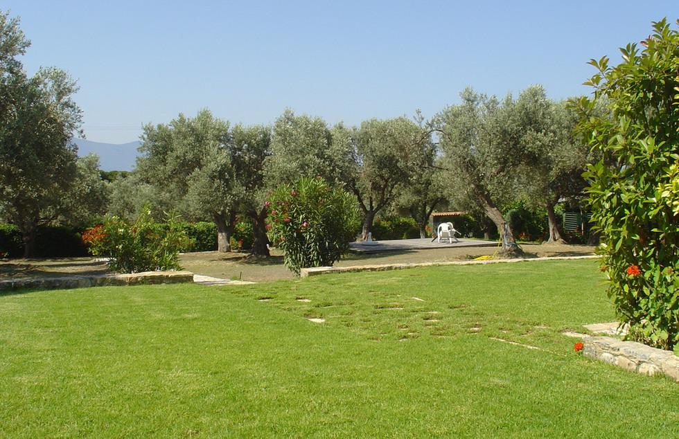 Garden Olive Grove Event Platform