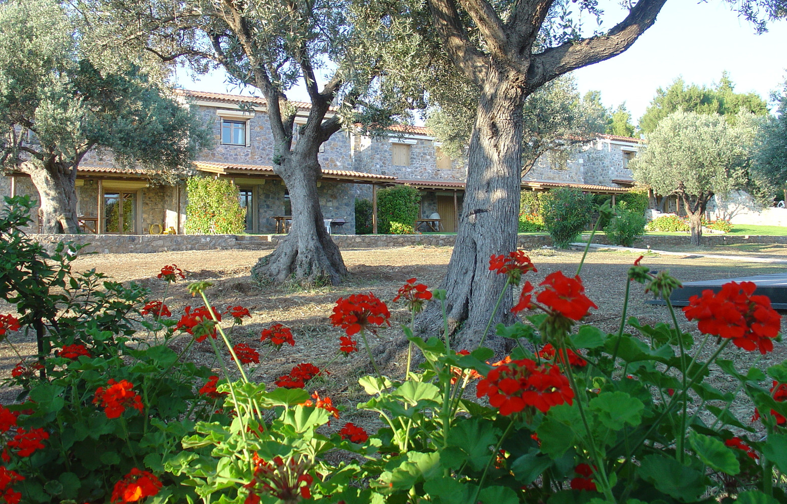 Houses from Olive Grove