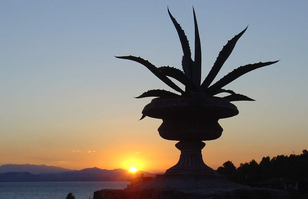 Seaview Cactus Sunset