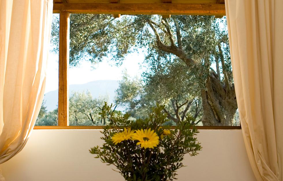 Living Area Window