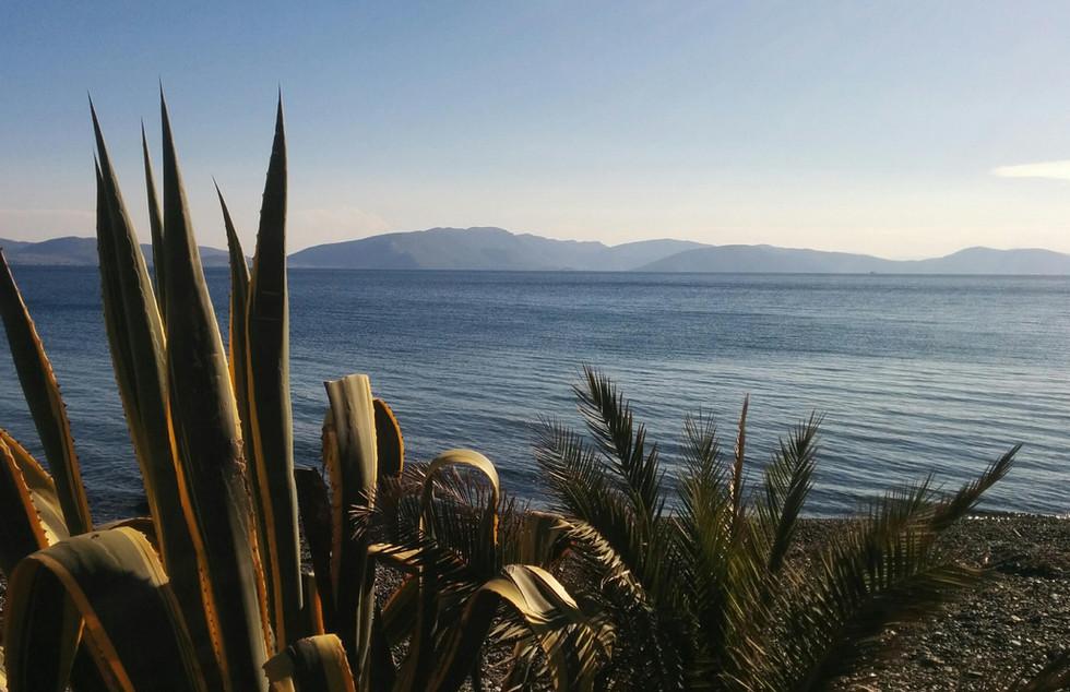 Alilea Beach and Plants