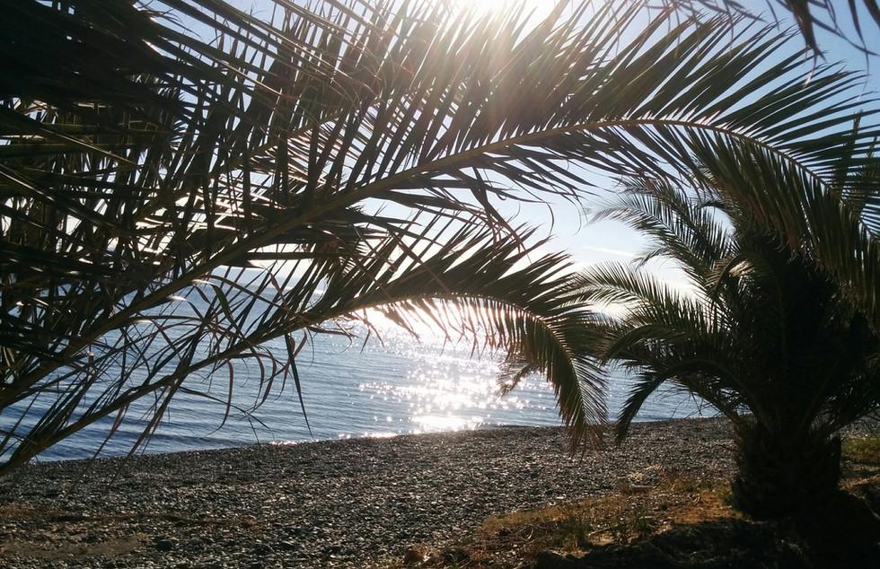 Alilea Sea Sparkles