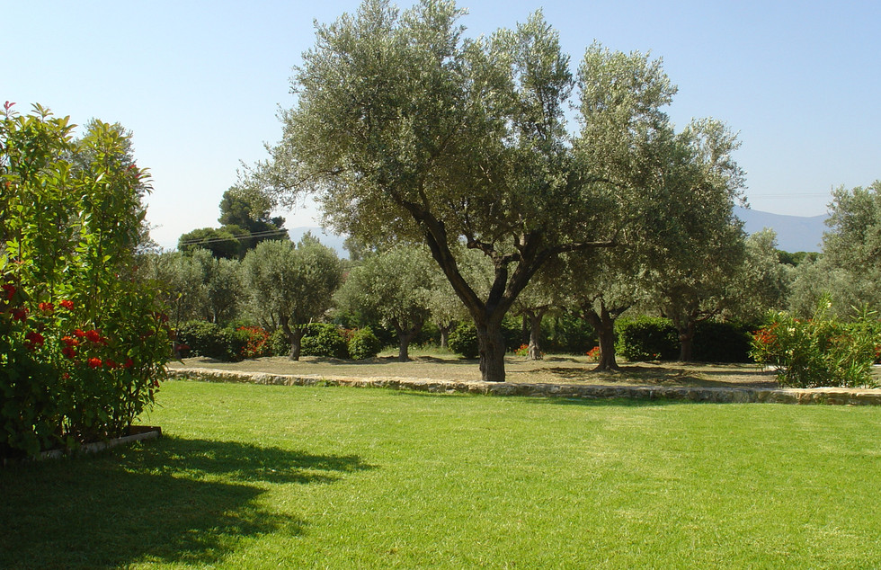Garden and Olive Grove