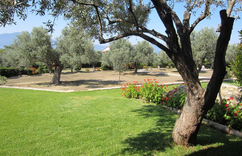 Garden View from Veranda