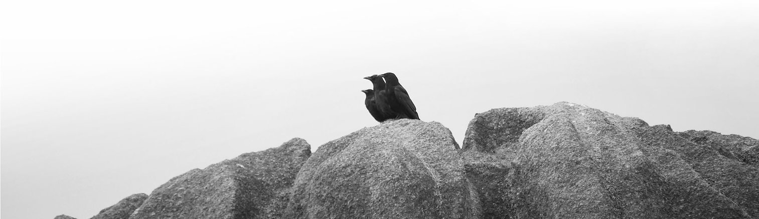 corbeaux-bando.jpg