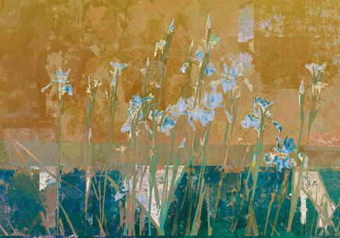 Iriser (fra Botanisk hage)