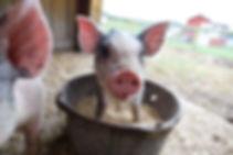 Farmtastic_Friday.jpg