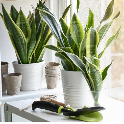 Plant in Decorative Pot