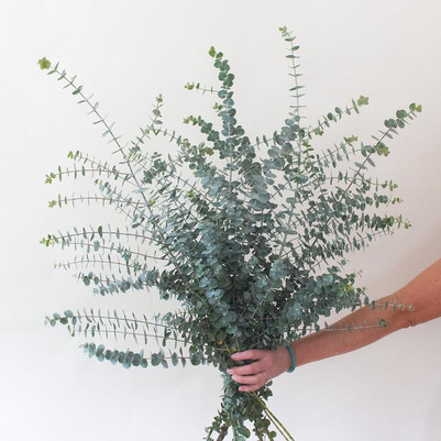 Baby Eucalyptus Bouquet
