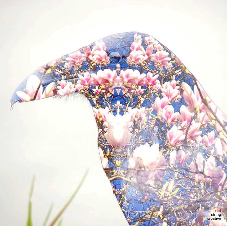 Raven art reverse flowers