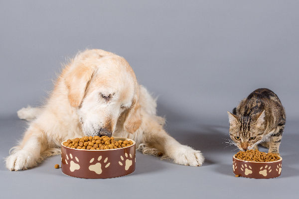 A-dog-and-cat-eating-out-of-food-bowls.j