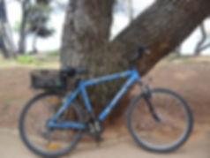 The Jack Experience, Jack Edwards, Summer, Holiday, Croatia, Pula, Istria, Bike, Cycling, Bike Ride, Tree, Sand