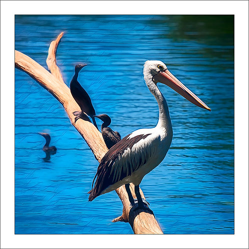 fp234. Pelican Log