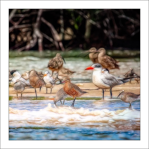 fp153. Seashore birds