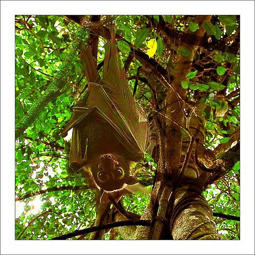 fp209. Fruit Bat