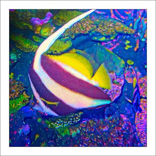 fp316. Penchant Coral Fish