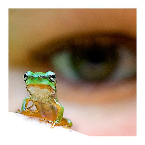 fp124. Frog Eye
