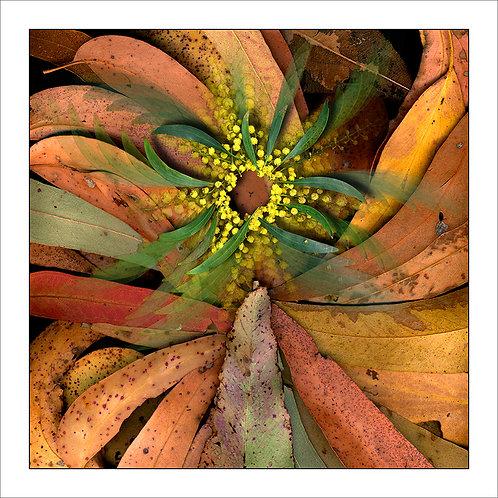 fp31. Whole Leaf