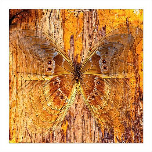 fp184. Paperbark Wings