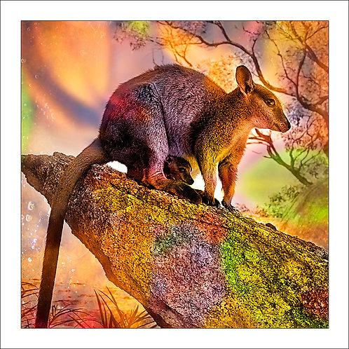fp147. Rock Wallabies