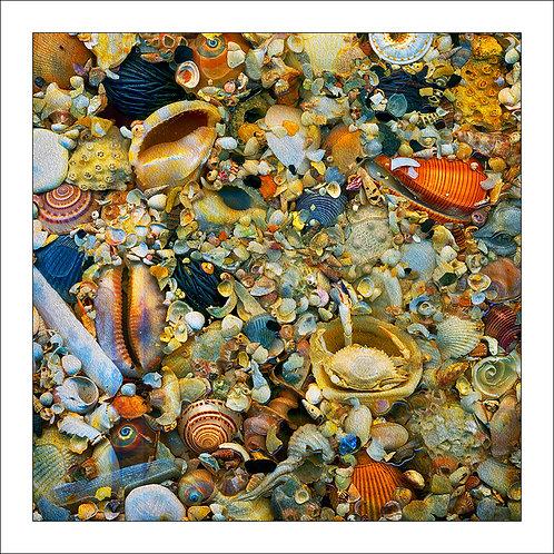 fp164. Tidepool Seashells