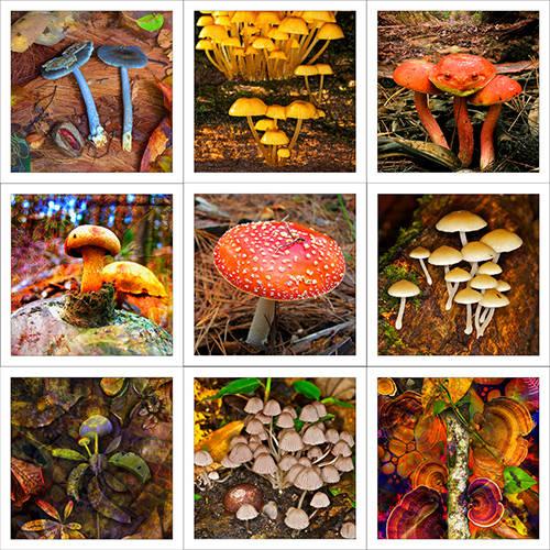 Funghi & Mushrooms