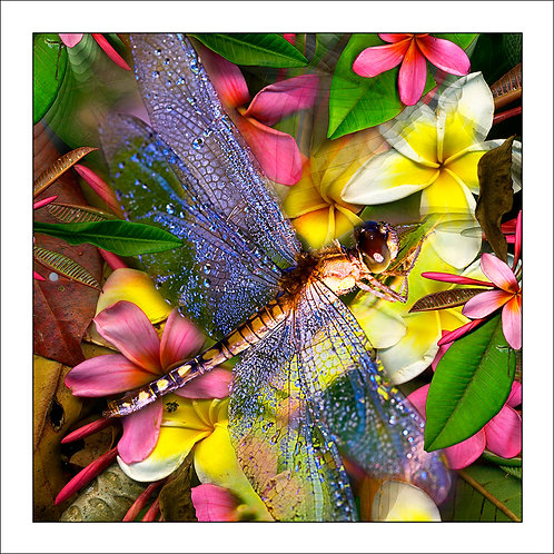 fp42. Dragonfly Flowers