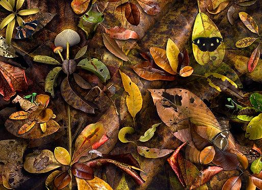 A Matter of Leaf