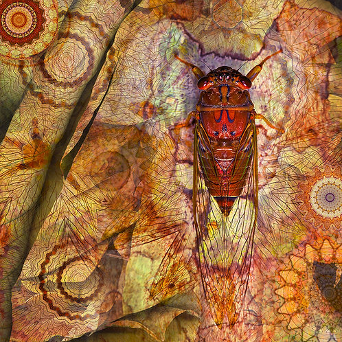 Cicada red