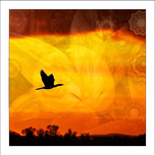 fp112. Flying Colour