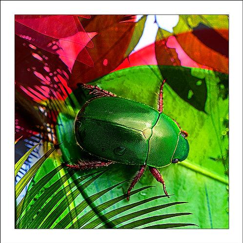 fp155. Green Beetle
