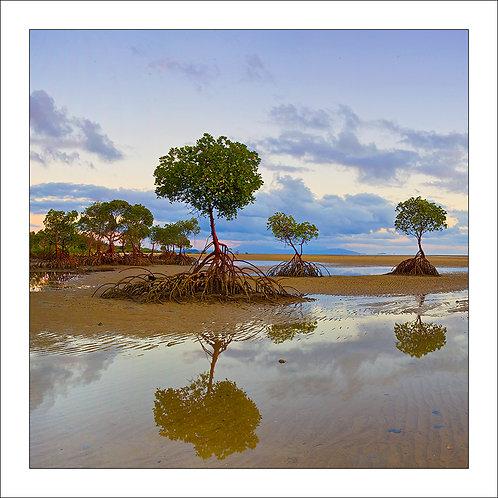 fp168. Mangrove Beach