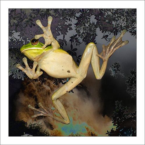 fp305. Falling Frog (whitelip)