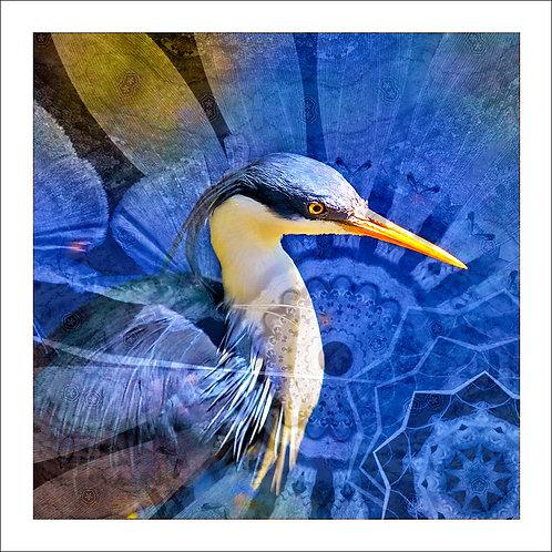 fp161. Pied Heron